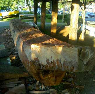 Log becoming a canoe